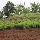 Aplican resultados de investigadores de Mayabeque en agricultura urbana de Venezuela