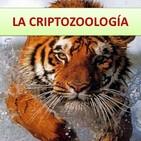 Sobre la Criptozoologia y animales extraños (12 de junio de 2019).
