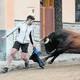 El 27 d'abril, a les 17.00 hores, eixirà al carrer a la Vall d'Uixó el primer bou al carrer salvatge de la temporada