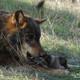 La Luciérnaga 18-07-18. Lobos, fraudes y expedientes
