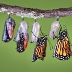 Podcast 87: de oruga a mariposa; el privilegio de forjarse a uno mismo