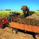 Llama Primer Vicepresidente a incrementar aporte de Cienfuegos a la producción azucarera