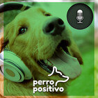 Perro Positivo
