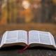 Bibeltekster for domssøndag/ kristi kongedag 24 november 2019