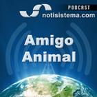 Amigo Animal - Notisistema