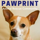 Pawprint   a weekly podcast dedicated to animal re