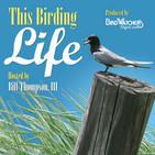 This Birding Life/Bird Watcher's Digest (M4A)