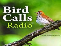 BCR 134: Frank Gallo, Birding in Connecticut