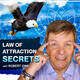 Protect Your Vibe with the Law of Attraction