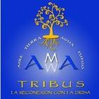 PROYECTO TRIBUS DE AMMA