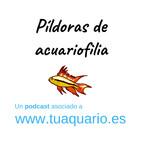 Pildoras de acuariofilia - Episodio 2. Ciclado del acuario