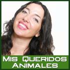 El boxeo y los animales se dan la mano. Adopciones perrunas. Un testamento para tus perris. 2019-11-30-MQA