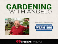 Gardening With Angelo 7-21-18: Watering and Harvesting Tips