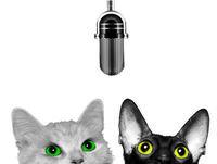 Katter & barn