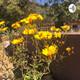 Flower season week 9