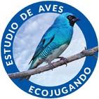 Noticias Ecojugando