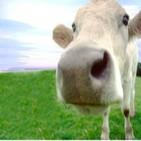 Podcast La Vaca