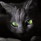 Los relatos del gato negro
