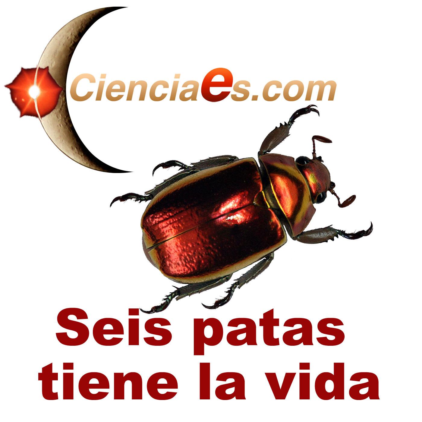 Huelga de hormigas, insectos carnívoros y adornos de cera.