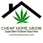 Learn How To Grow Autoflowers Hydroponically