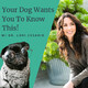 Introduction to Your Dog Wants You to Know This!