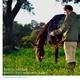 Lo que debes saber antes de tener un caballo