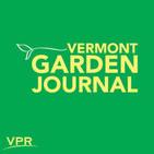 Vermont Garden Journal: How To Control Cucumber Beetles In Your Garden