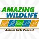 Binturong | Wreathed Hornbill | Orangutan