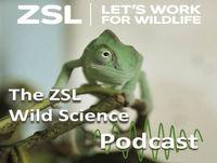 ZSL #019 How electronic animal tracking has revolutionised marine conservation