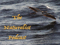 The Naturalist Podcast Episode 31: Going Offshore with Kate Sutherland