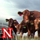 Cattle Market Outlook with Jim Robb