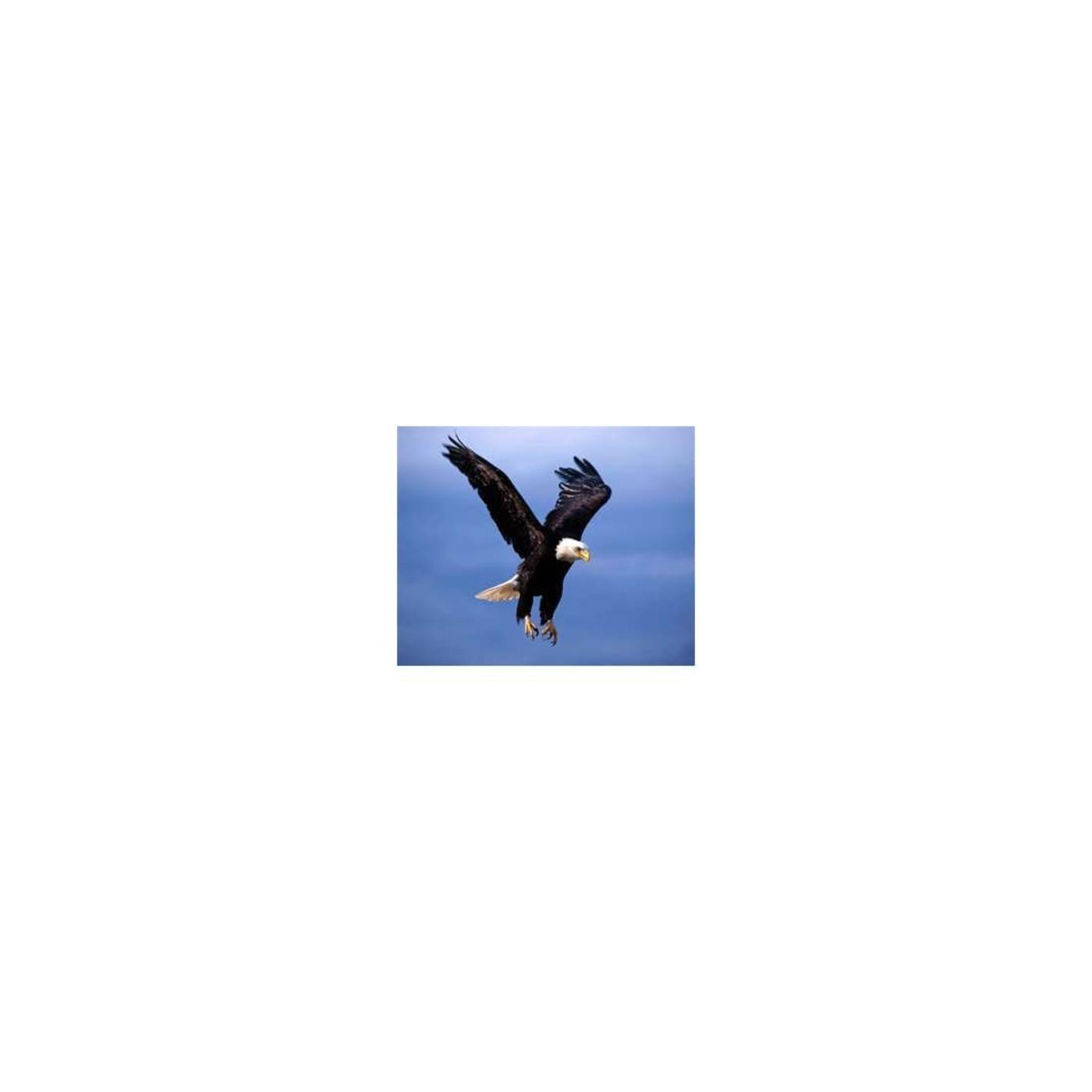 Aguila o Gallina Equipovision