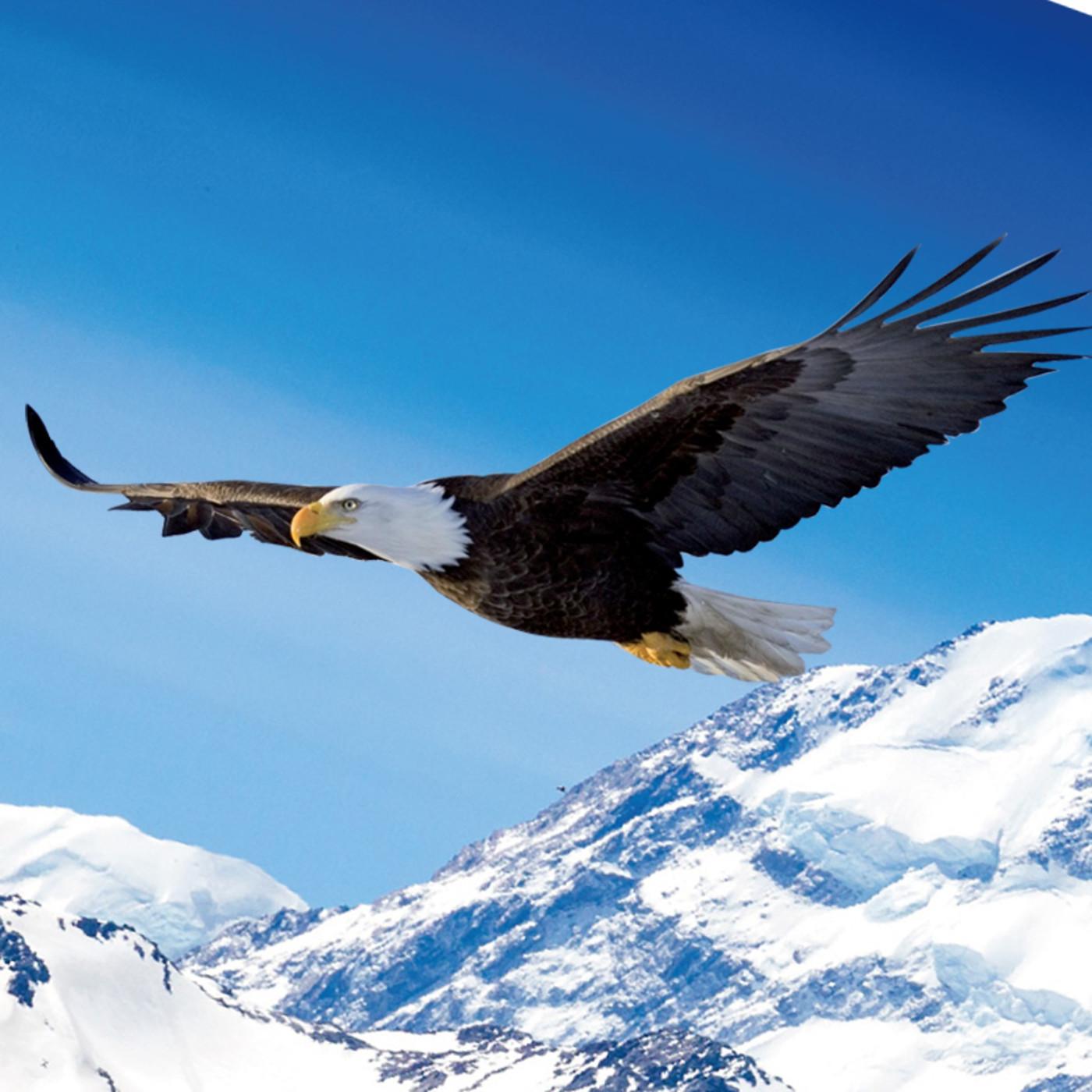 Equipo Las Aguilas