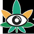 Cannabis Misteriosa Marihuana