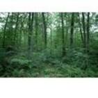 Bosque europeo