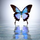 azulmariposa